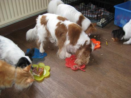 Dog stealing birthday cake - photo#7